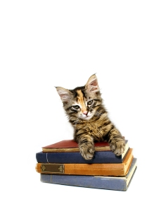 bigstock_Kitten_And_Books_107820