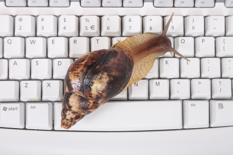 bigstock_Snail_And_Keyboard_2145192