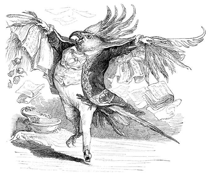 grandville-cockatoo