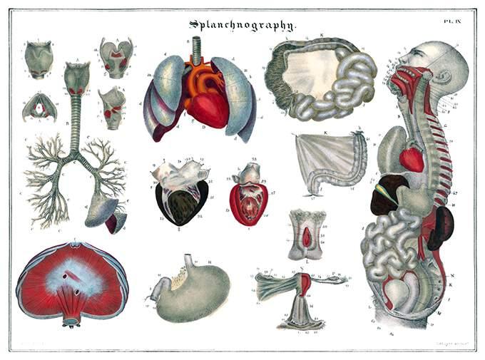 splanchnography